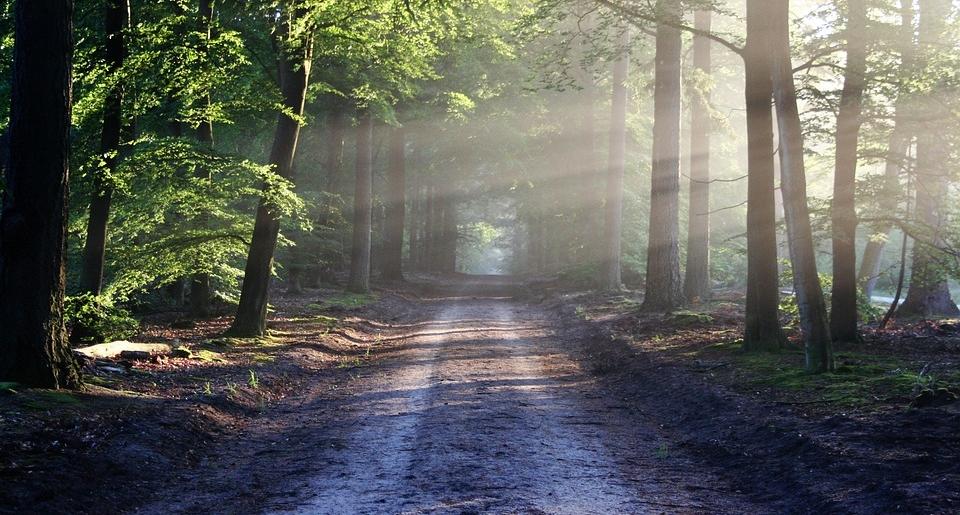 Waldweg mit Sonnenstrahlen