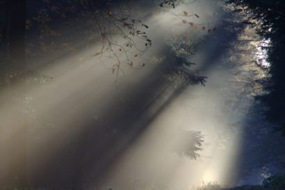 Sonnenstrahlen brechen durch einen nebligen Wald