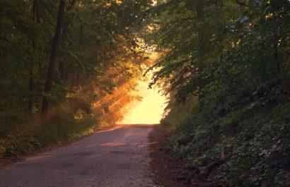 Weg mit Bäumen und Sonnenlicht