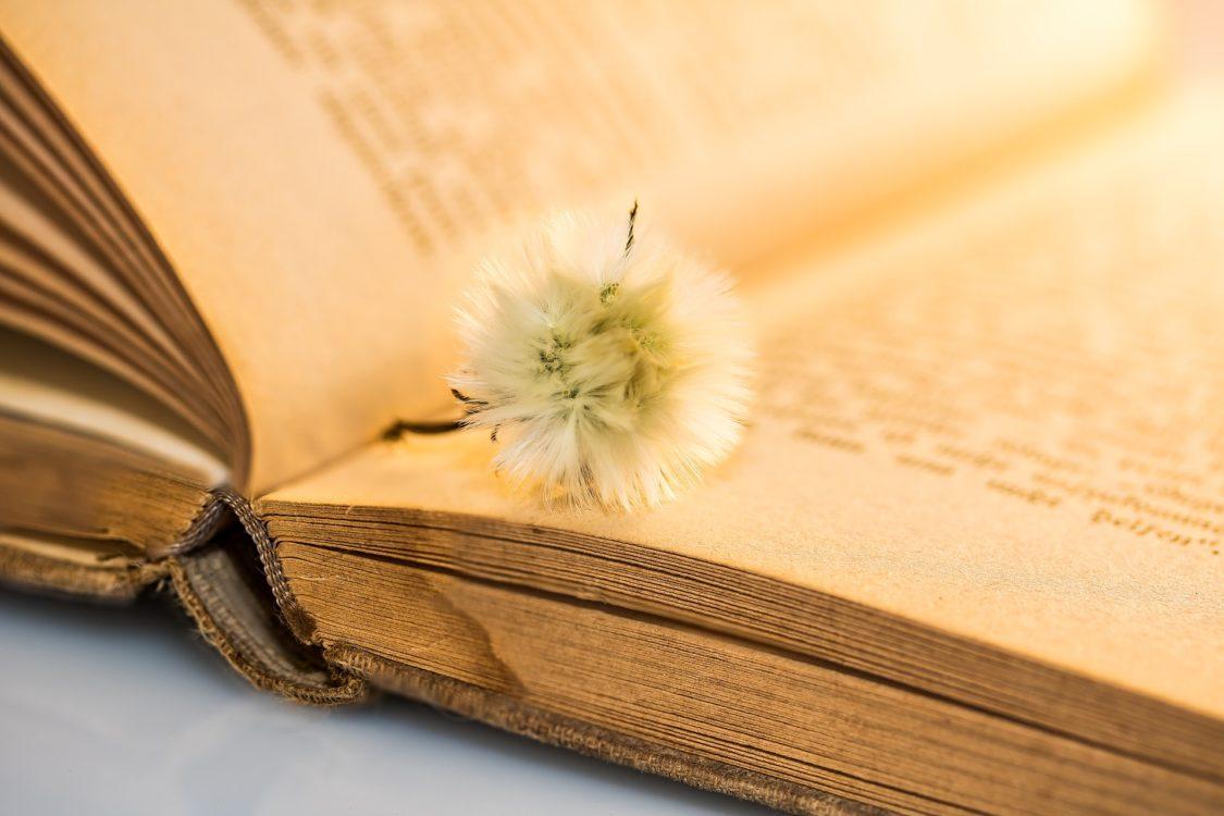 altes Buch mit Pusteblume