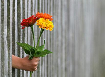 Blumen werden durch einen Zaun hindurch gereicht