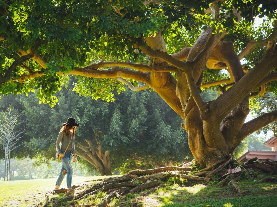 Alter Baum mit starken Wurzeln