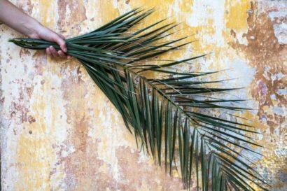 Palmzweig
